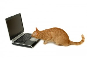 cat is looking at laptop